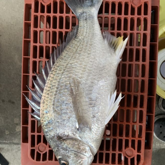 松チャンの釣り日記