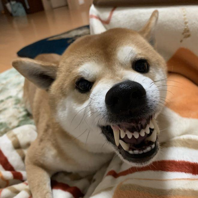 犬は歯が丈夫です。